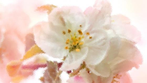 White blossom wallpaper