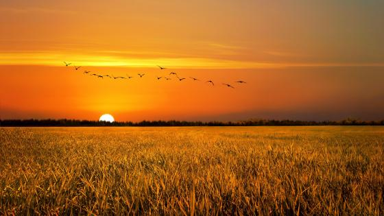 Field sunrise wallpaper