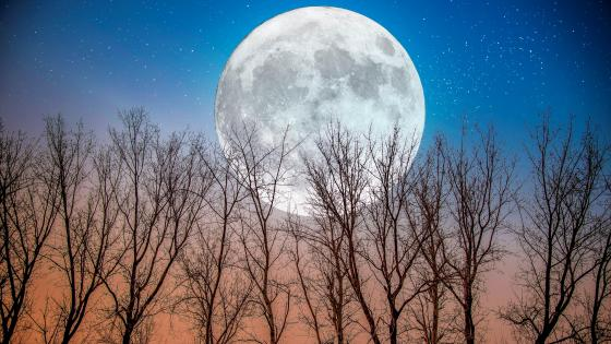 The moon in the woods wallpaper
