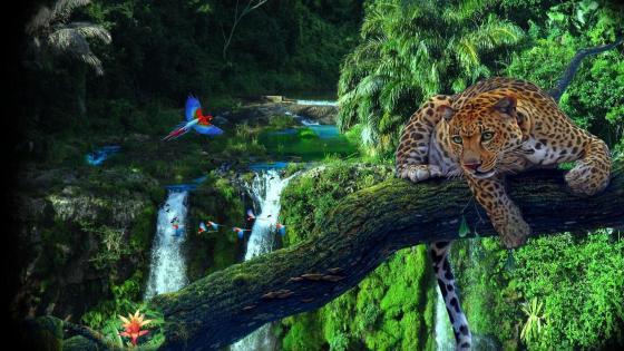 Amazon rainforest wallpaper