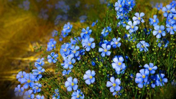 Roadside blue flowers wallpaper