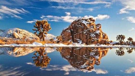 Joshua Tree National Park at winter wallpaper