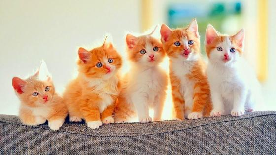 Kittens wallpaper