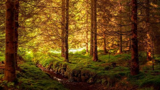 Mossy forest creek wallpaper