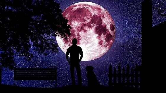 Man with a dog at full moon wallpaper