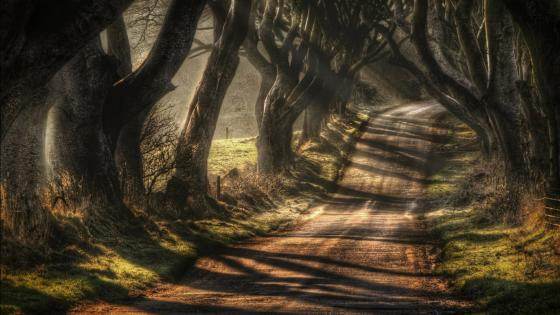 Dark Hedges (Bregagh Road) wallpaper