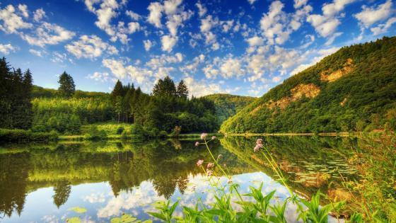 Summer lake landscape wallpaper