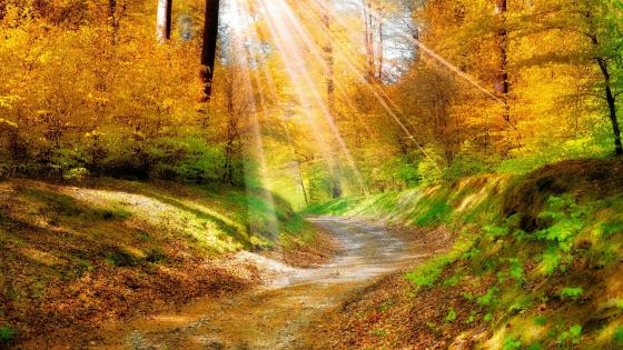 Rays of sun on the fall forest path wallpaper