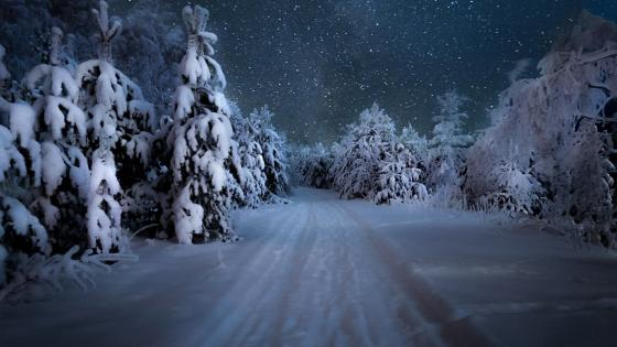 Starry winter night over the snowy forest wallpaper