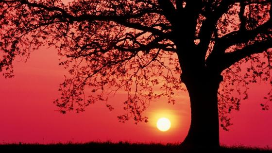 Lonely tree silhouette in the red sunset wallpaper