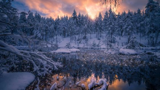 Winter wonderland in Norway wallpaper