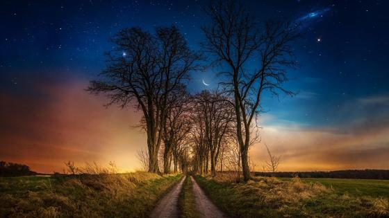Dirt road among the trees under the starry night sky wallpaper