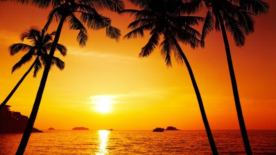 Red sunset with palms wallpaper