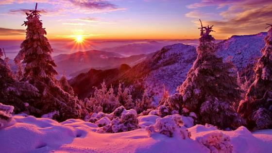 Purple winter sunset wallpaper