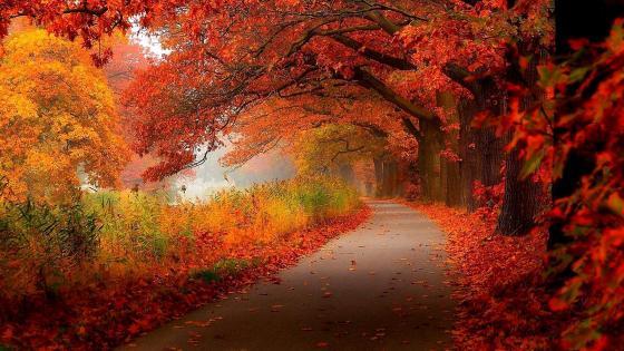 Autumn path wallpaper
