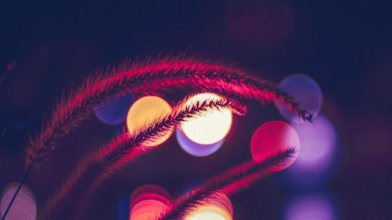 Bokeh neon lights wallpaper