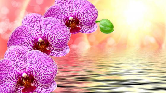 Orchid flower art wallpaper