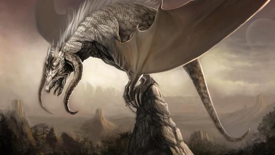 White dragon drawing illustration wallpaper