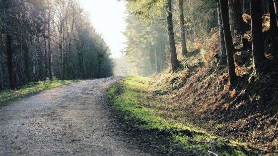 Forest road wallpaper