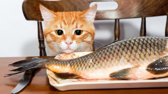 Temptation: A kitten with a fish wallpaper