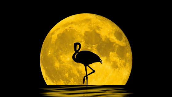 Flamingo silhouette in the full moon wallpaper