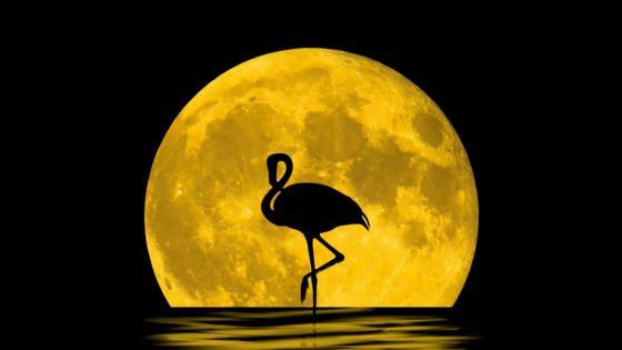 Flamingo silhouette in the full moon wallpaper