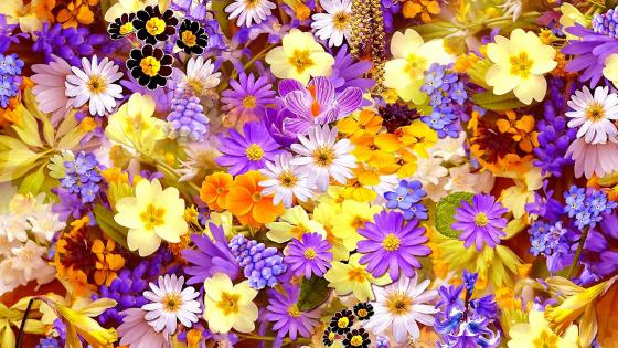 Colourful Flower collage wallpaper