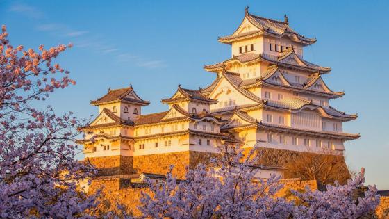 Himeji Castle Cherry Blossom Spot wallpaper