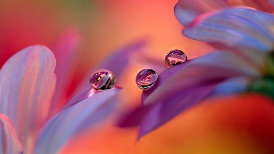 Water drop reflection wallpaper