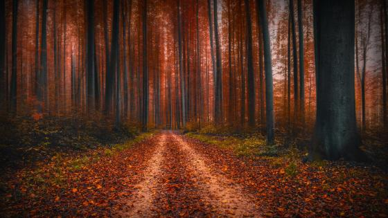 Forest pathway at fall wallpaper