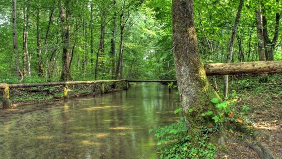 Spring forest river wallpaper