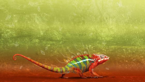 Colorful Chameleon digital art wallpaper