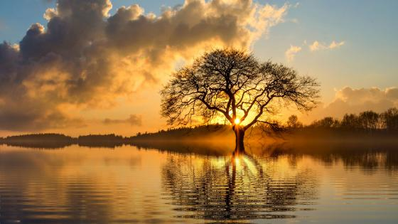 Lone tree at sundown wallpaper