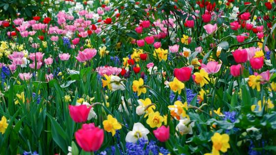 Spring flowers in the garden wallpaper