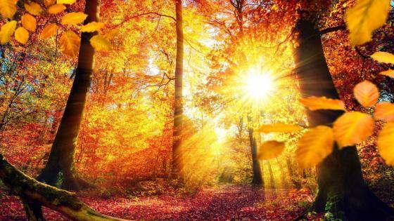 Gold fall forest wallpaper
