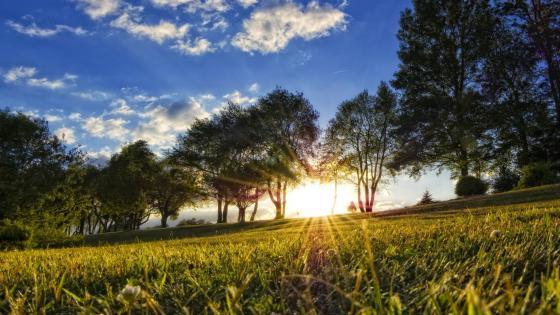 Sundown in the meadow wallpaper