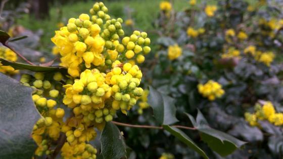 Yellow spring awakening wallpaper