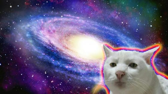 Serious cat in Space wallpaper