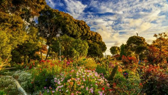 Amazing garden in Algarrobo, Chile wallpaper