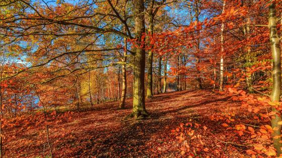 Sunny autumn forest wallpaper