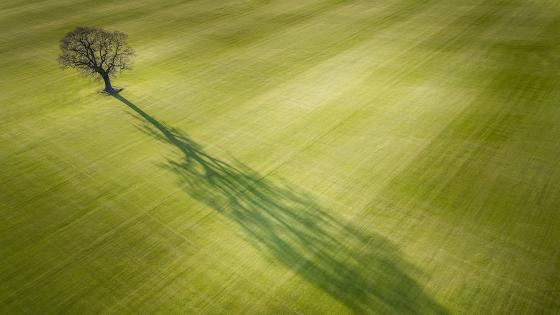 Lone tree with huge shadow wallpaper