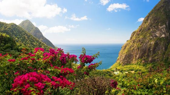 Gros Piton and Petit Piton in Saint Lucia Caribbean Island wallpaper