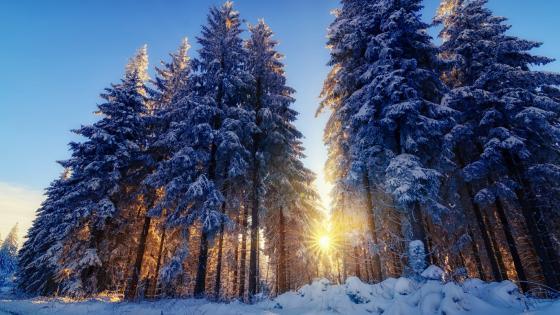 Sunny winter day wallpaper