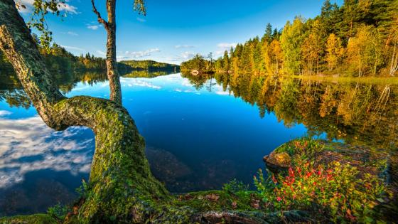 Autumn reflection (Hurum, Norway) wallpaper
