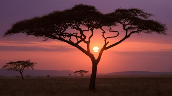 African sunset wallpaper