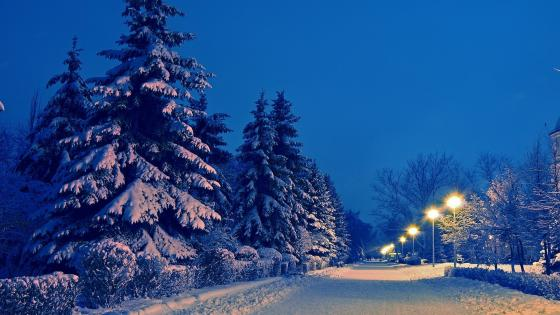 Winter street lights wallpaper