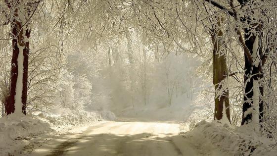 White winter road wallpaper