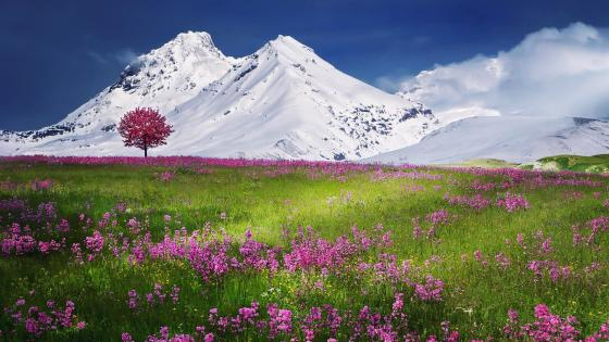 The Swiss Alps at spring wallpaper
