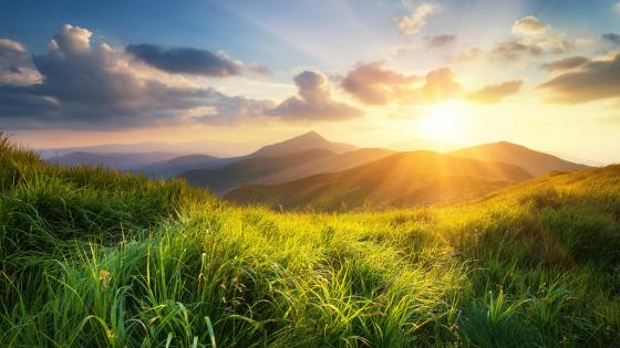 Green grass and sunshine wallpaper