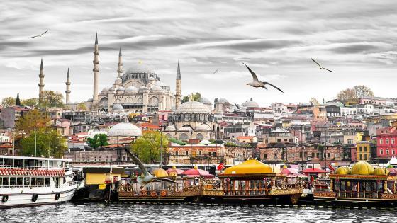 Seagulls in Istanbul wallpaper